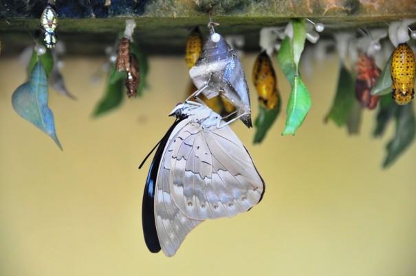 2生まれたての蝶
