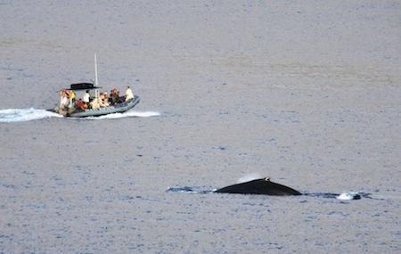 3ラハイナのクジラ