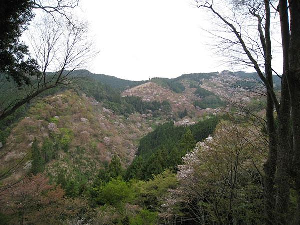 02_B吉野山b