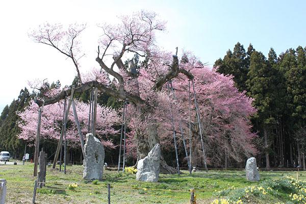 04_B釜の越桜