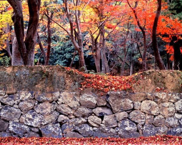 「東大寺僧房跡」。崩れかけた石壁が往時を偲ばせる。(1983年)
