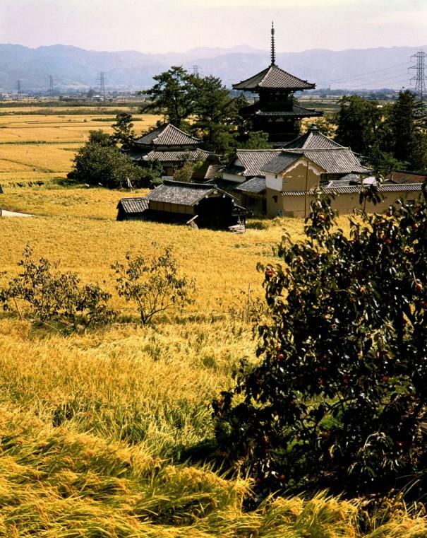 「法起寺の塔を望む」。三重塔は1300年の間、稲田のなかに立ち続けている。(1964年頃)