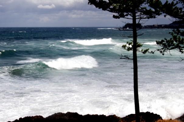 岸に近づくほど波は純白となりくだけ散る。