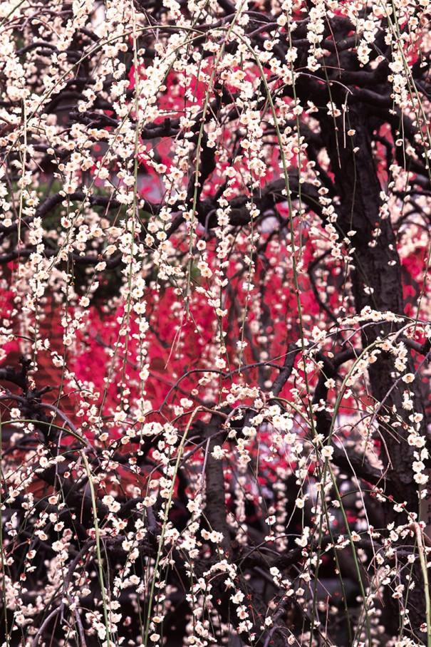 紅白の花をパターン模様のように。