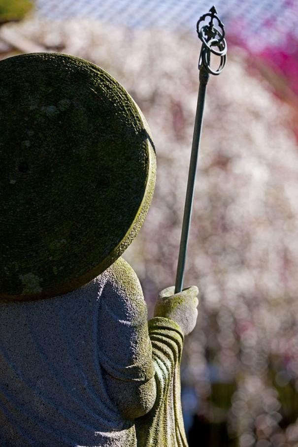 地蔵石像の背中越に白梅をボケで撮影。