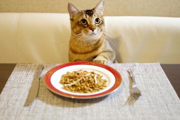 虚弱体質だったアジアくん(名前の由来はお魚のアジ!)。小さい時に病気がちであまり食べられなかったせいか、今はわさびちゃんちの誰よりも食いしん坊です。「もう食べてもいいですか?」(アジアくん)