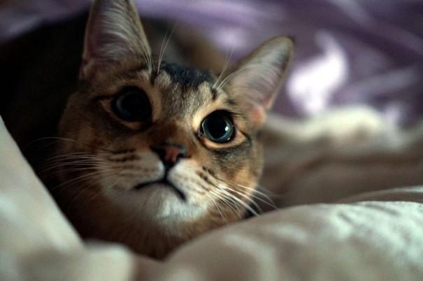 明け方、人間家族がまだ深い眠りについている頃、猫たちは「ハンティングの時間!」とばかりに目が覚めます。そして「ご飯!ご飯!」と総長の催促が始まるのです…。