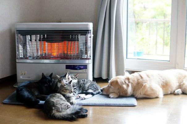 昼下がりのお昼寝って、気持ちいいですよね。でも、猫にとってはこれも重要な任務なのです!