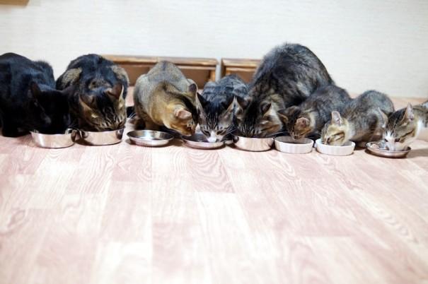 みんな揃ってお行儀よくごはんを食べるわさびちゃんちの保護猫たち……。かと思いきや、食いしん坊のアジア(左から3匹目)は、自分の分を早々に食べ終わって、あわびの分を横取りしようとしています。