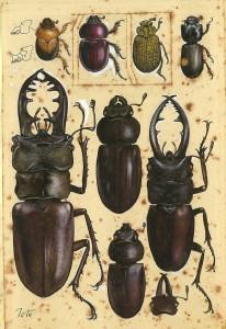 立石鐵臣《昆虫》(原画)〔1963-1964年 個人蔵〕