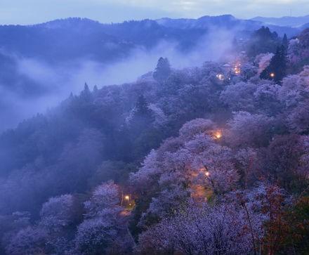 リサイズ奈良県シンポジウム 桜