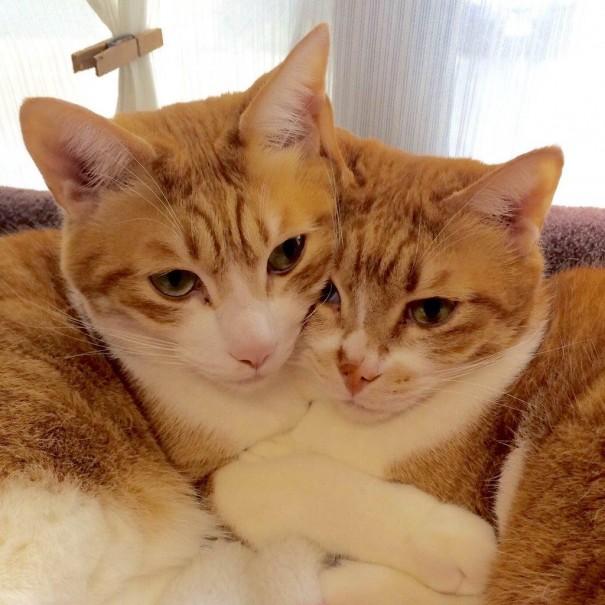 仲良し兄弟のちゃちゃ丸(左)とガンバ(右)