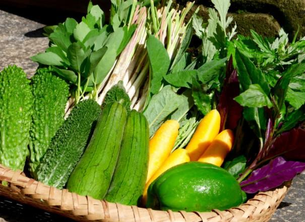 リサイズ島野菜7B