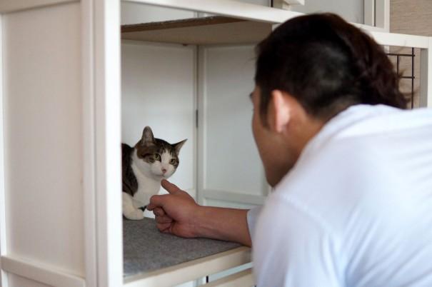 野良出身の保護猫にがりちゃんの心を開こうと、日々、話しかける父さん。