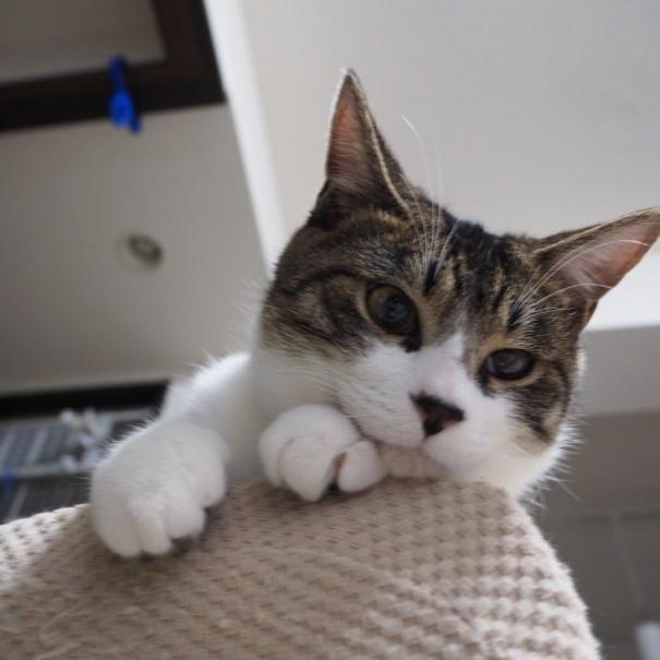 保護猫カフェから迎えたライ。