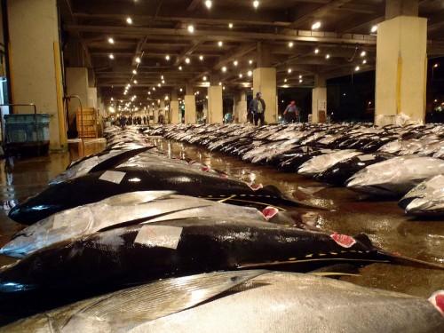 沖縄・那覇市の泊漁港に水揚げされたまぐろ。この漁港の水揚げ量は1日平均で20トン、多いときには50トンに及び、そのうちまぐろが70%を占める。
