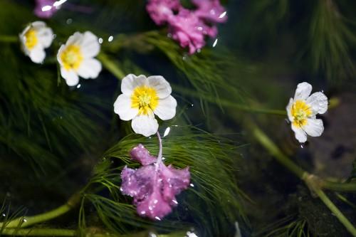花のアップ 撮影/市川 傳(180mmマクロレンズ ・ 絞り f3.5 ・ シャッター 1/200)