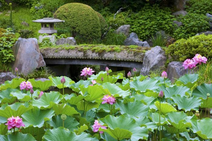 小堀遠州の作庭と伝えられる記主庭園を彩る古代ハス。