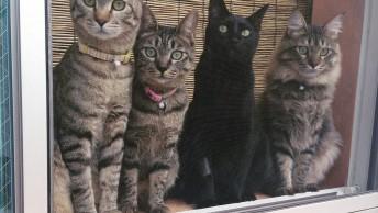 左からリイ、ユキイ、トイ、ライ。みんな本当の兄弟みたいに仲良し。