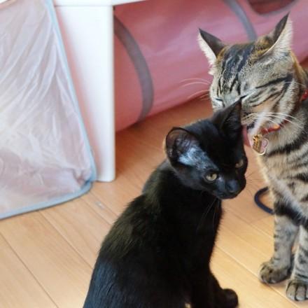 弟分のでんすけを猫っかわいがりするお姉ちゃん肌の一味ちゃん。