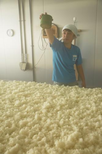 麹菌を蒸米にふりかける種切りという作業。