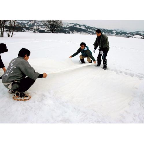 早春の晴天に行なわれる雪晒し。1日3〜4時間、2日ほどさらすと濁りが抜け、上品な生成りの白色に。
