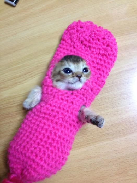 おばあちゃんお手製のピンクのおくるみ(医療用拘束具)に包まれた姿が、タラコみたでとってもかわいかったわさびちゃん。