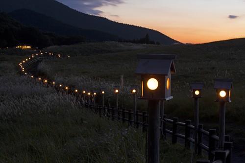 「山灯り」が美しい曽爾高原のススキ。