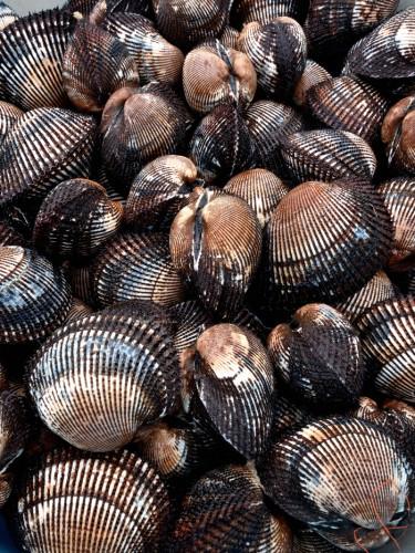 赤貝はフネガイ科の二枚貝。殻の表面に42本前後の縦溝がある。市場では、近似種のサトウガイなどと区別するため、「玉」または「本玉」という呼び名もある。