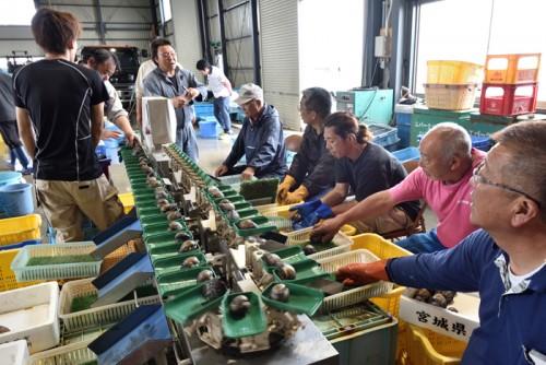 水揚げ後は、漁港施設内の機械で重さ別に選別する。210g以上を最大に、7つの規格に仕分けてから競りにかける。