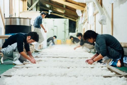 若いスタッフ皆で蒸米放冷。
