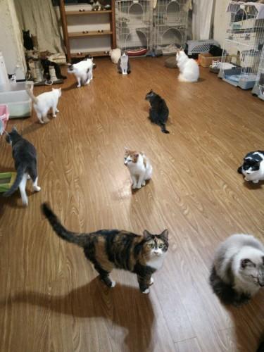 板橋区内に3か所ある猫の方舟レスキュー隊のシェルターのうちのひとつ。20匹~25匹ほどの猫たちのうち、半数がお年寄りのもとからやってきた猫たちだ。