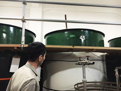 発酵中の仕込タンク。