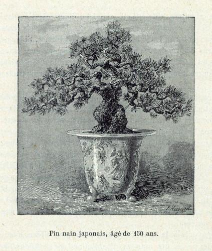 1889年パリ万博『Les Merveilles de L' Exposition de 1889 』Librairie Illustrée 〔1889 年頃 大宮盆栽美術館蔵〕