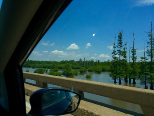ルイジアナ州南部にはアメリカ最大の湿地帯が広がっている。水の中にヌマスギがすくっと立つ様はルイジアナを代表する景色らしいが、日本人の私には珍しく映る。