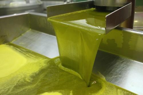 まだ緑色の段階の若いオリーブの果実から搾ったばかりのオイルは、鮮やかな緑色をしている。