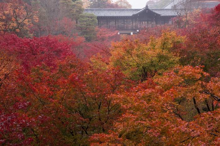 通天橋を背にした京都有数の紅葉名所。