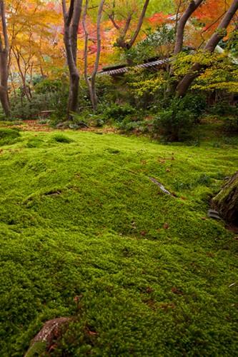 紅葉との色彩対比が美しいコケの緑。
