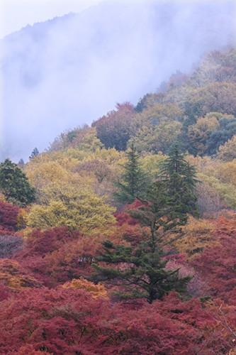 雨に煙る比叡山の山裾。