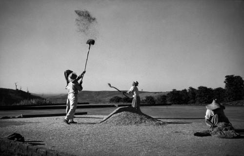 眞田準の農園、パラナ州ロンドリーナ、1955年(C)Haruo Ohara / Instituto Moreira Salles collection