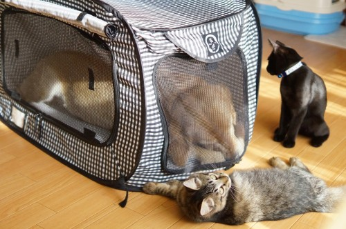 成猫3匹、もしくは大型のゴールデンレトリーバー1匹が悠々と入れる大きさのポータブルキャリー。小さく畳んで収納でき、ビニール製なので掃除も簡単です。