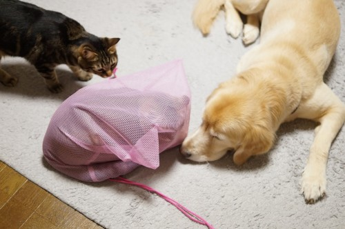 メッシュでできた旅行用の衣類収納袋。成猫1匹がすっぽり入り、通気性も抜群。パニック時に使えそうです。