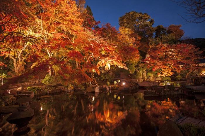鎌倉唯一の紅葉ライトアップ。