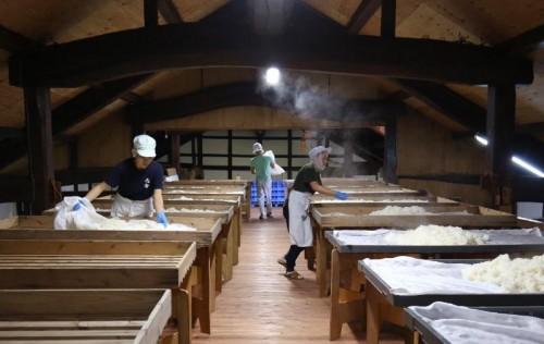 蒸米の放冷作業時、僅かな雑菌までをも排除する為の手袋を着用。