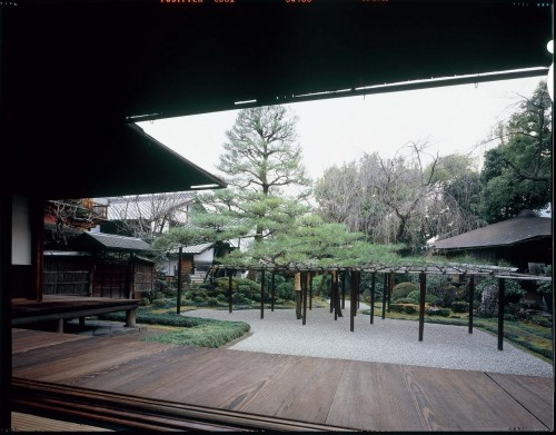 松の間の広庭に伸びる臥龍松。右手は茶室の曲木亭(非公開)。