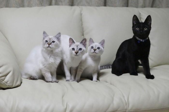 父さん母さんの懸命な介護の末、すっかり元気なべっぴん三姉妹に。左からとうふ、きぬ、もめん。わさびちゃんちの長男でんすけと。