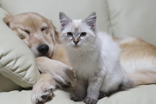 開くのもつらそうだった目もキレイに治って、ゴージャスな長毛美猫に変身したとうふちゃん。