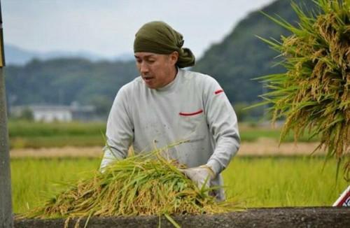 稲刈り中の大治郎さん。