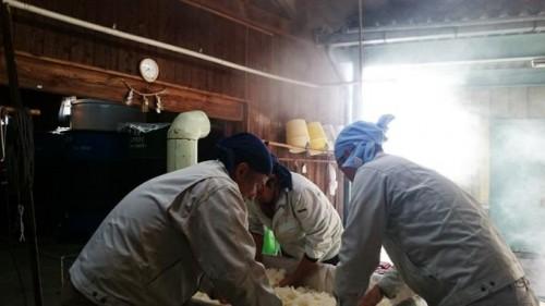 蒸米の放冷作業。