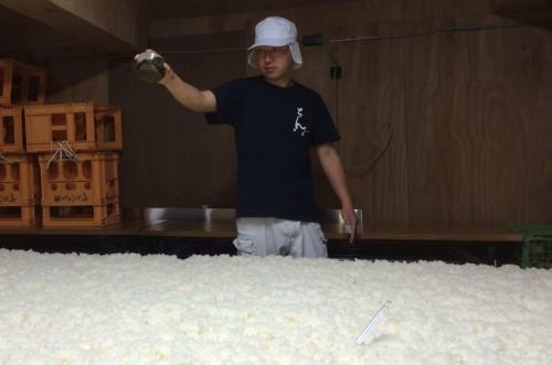 麹室で麹菌を蒸米に植え付ける太三さん。